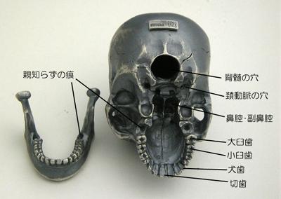 skull-006.jpg