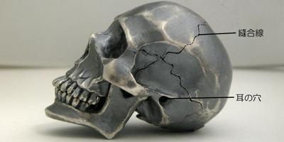 skull-007.jpg