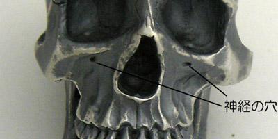 skull-008.jpg