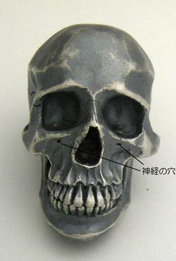 skull-013.jpg